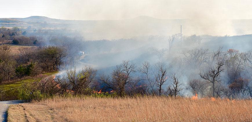 Grassfire - Gregg Schill research